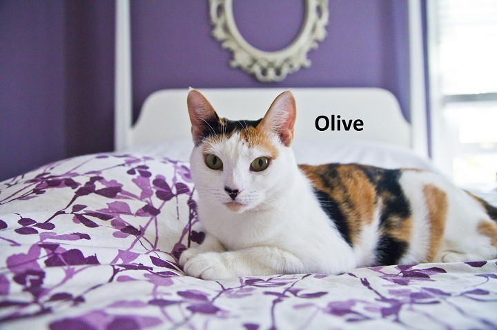 olivekicey